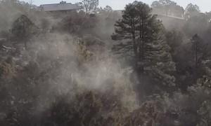 Pollen Explosion in Prescott