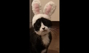 This cat has a priceless reaction to his new Easter bunny ears