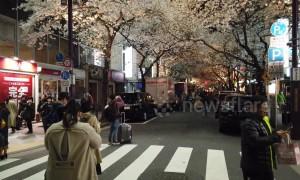 On Tokyo's Sakura Street, cherry blossoms bring traffic to a standstill