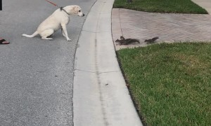 Dog and Squirrels Have a Standoff