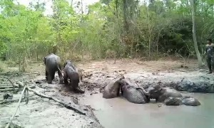 Six baby elephants rescued from muddy pit after being trapped for days