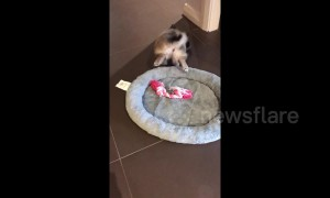 That's a flipping good meal! Puppy does handstand while eating breakfast