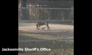 Officer catches dog skateboarding in Northwest Jacksonville