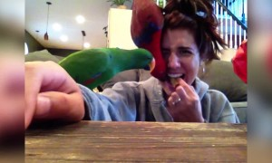 These Parrots want Crackers!
