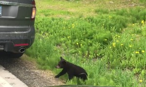 Precious Family of Black Bears Cross Road