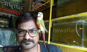 Affectionate bird perches on man's glasses at Indian pet store