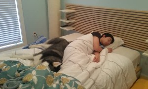 Husky tries to wake up owner but hilariously cuddles instead