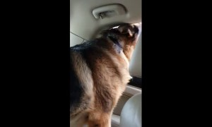 Dog gives priceless reaction after realizing he's at the vet