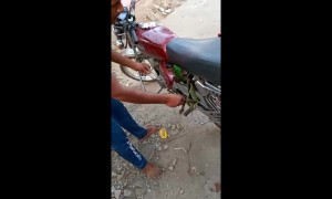 Tiny green snake keeps nipping at man trying to rescue it from motorcycle engine