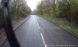 UK lorry driver slows down to let a flock of ducklings cross safely with their mother