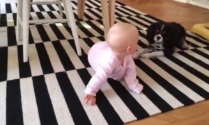 Pup and Baby are BFFs!