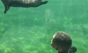 Otter puppy adorably plays with toddler at aquarium