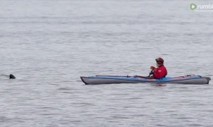 Killer whale unbelievably swims right beside man in kayak