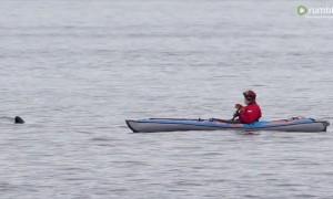 Killer whale unbelievably swims right beside man in kayak