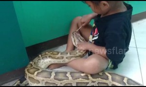 Little girl applies medicine to giant 4.5m python to treat mouth infection