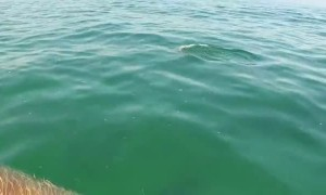 Baby dolphins decide to swim with paddle boarder in California