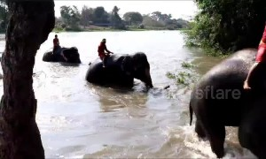 Elephants hold jumbo swimming race to keep fit in Thailand