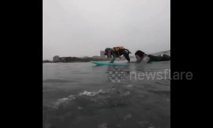 Adventurous spaniel learns how to surf the waves with his owner in Japan