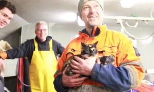 Stowaway cat found on Dutch ship after hiding onboard for a week