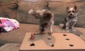 Dog plays 'whack-a-mole' with tasty sausage treats
