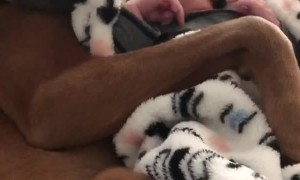 New Born and Puppy Share Special Bond