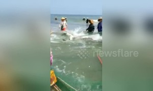 Chinese fishermen free enormous shark trapped in fishing net
