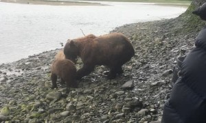 Momma Pair Brings Salmon to Shore for Her Cubs