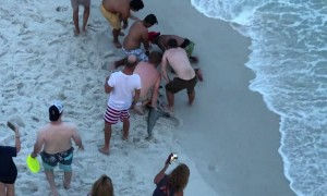 Swimmers Shocked by Huge Hammerhead Shark