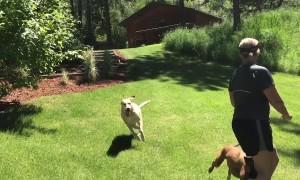 Energetic Pets