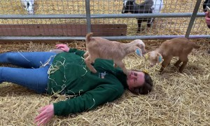 Tiny Goat Stomps Woman's Face