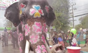 Elephants soak crowds with their trunks in mass water fight