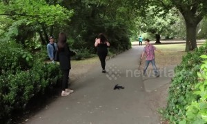 Irish prankster scares park-goers with fake spider