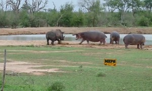 Incredible moment shows hippo scaring off threatening rhino