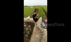Little girl enjoys tea-time with pet crocodile and cockatoo
