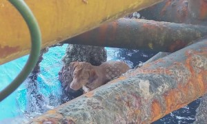 Stranded dog is rescued from sea 136 miles from shore