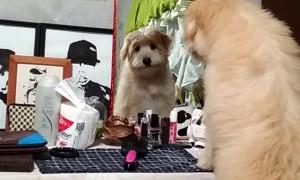 Looking Through a Strange Window at a Strange Dog
