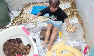 Little Girl Gives Crocodile a Bath
