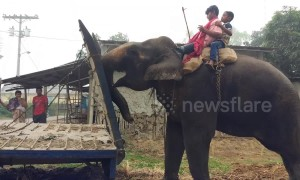 Quite the trunk on that vehicle! Elephant helps push truck stuck in the mud