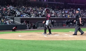 Umpire Learns Not to Interrupt Bat Dog