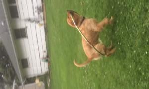 Hula Hoop Confuses Pup