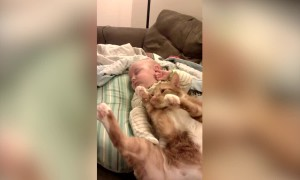 Baby and Cat Snuggle – SO CUTE