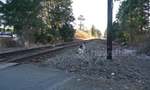US firefighter rescues husky from train tracks and brings it home
