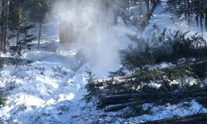Buncher Machine Lays Down Tree After Tree