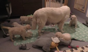 Mother Dog Teaches Her Puppies a Lesson in Patience