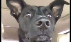 Dog totally loses her mind after realizing she's at the park