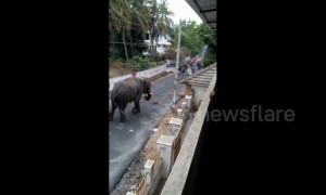 Raging elephant wrecks havoc on Indian town