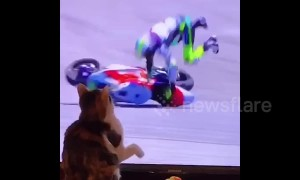 Thug cat 'knocks' Moto GP rider off bike