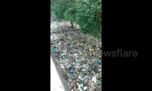 Video shows horrific scale of plastic pollution in Indonesian mangrove swamp