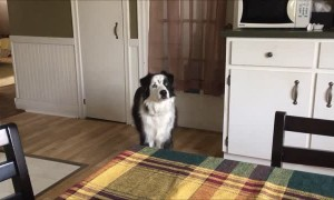 Dog hilariously stomps feet when told she can't go outside