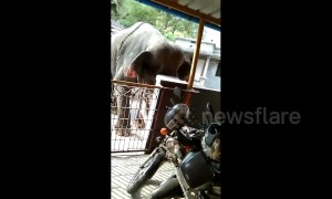 Raging elephant terrrisies locals and wreaks havoc in South Indian town
